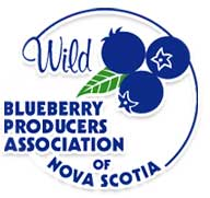 logo blueberry